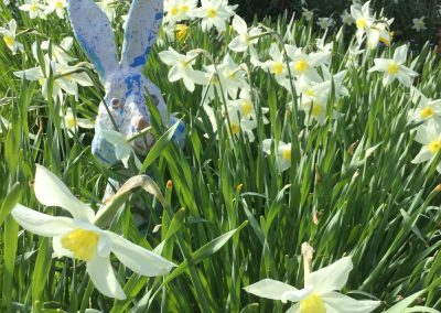 Ceramic rabbit made by sarah monk ceramics hiding in the daffodils in the garden at eastnor pottery